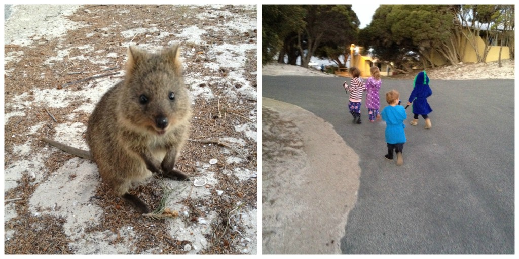 quokka and spotting